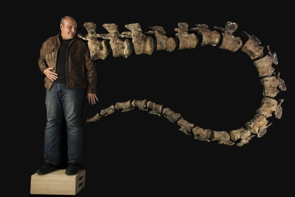 This is Lacovara standing next to 22 of the 32 vertebrae of Dreadnoughtus, which is the largest known of all the land animals.