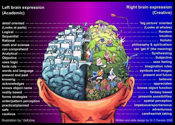 the brain left vs right essay This popular myth has once again been debunked by university of utah neuroscientists who used brain imaging to show there is no evidence that people are 'right.