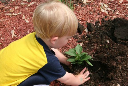 Description: Owen planting