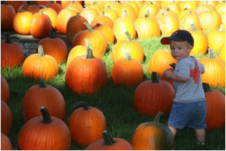 Description: Owen picking pumpkins